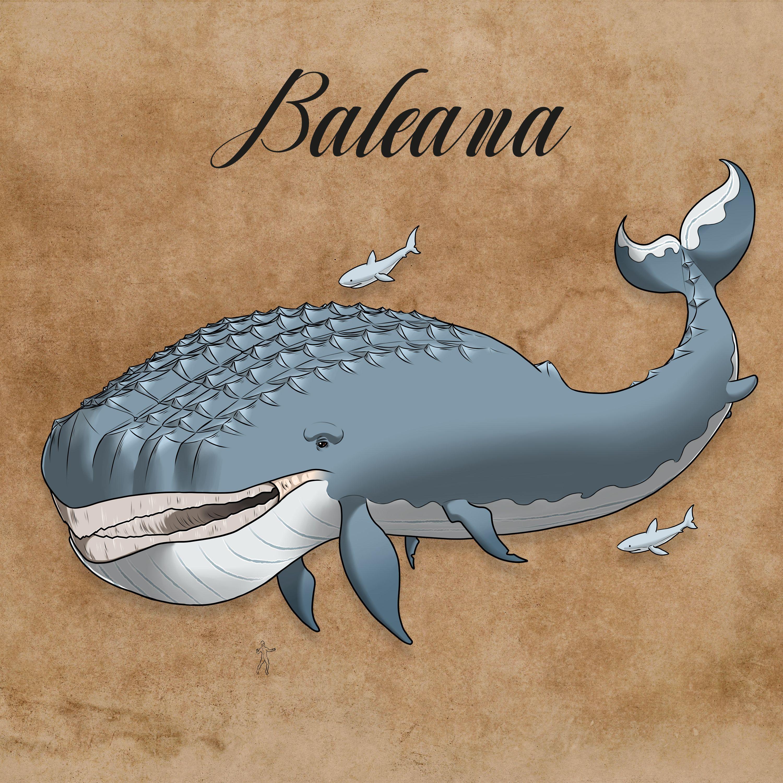 baleana_artenbuch-compressor